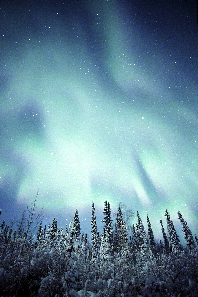 Northern Lights over Snow covered Trees, along Dempster Highway, Yukon.
