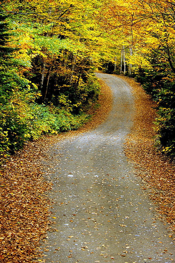 Country Road, Mount Carleton Provincial park, New Brunswick.