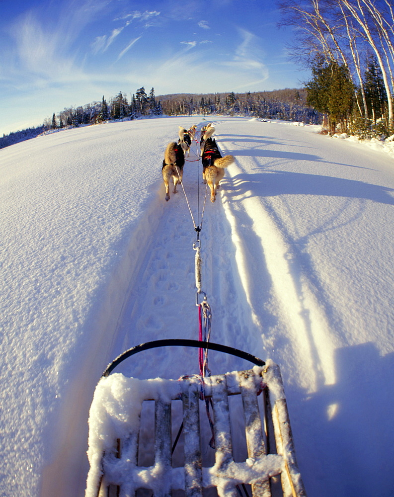 Dog Sledding on Frozen Lake, Lanaudiere Region, Entrelacs.