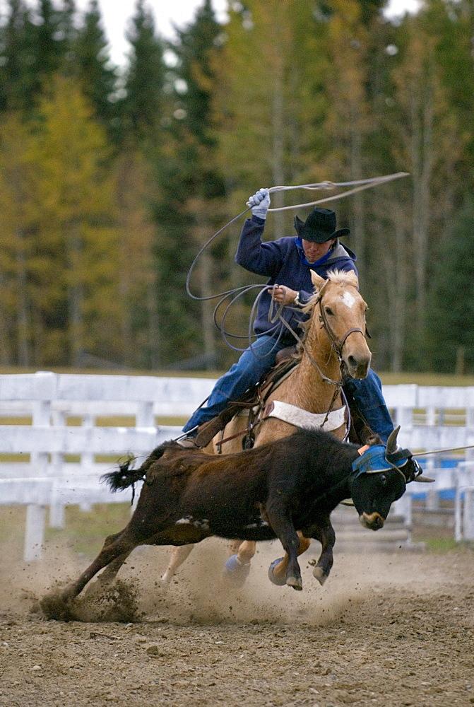 Man Roping a Steer on Horseback, Cariboo Region, BC