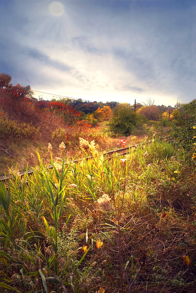 Field and train tracks in the Don Valley, Toronto, Ontario