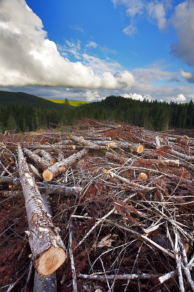 Logging clearcuts behind Shawnigan Lake, Vancouver Island, British Columbia
