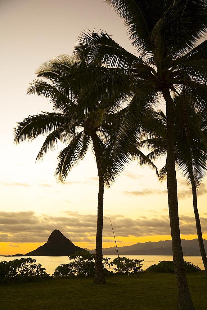 Hawaii, Oahu, Silhouette of palm tree and Chinaman's Hat.