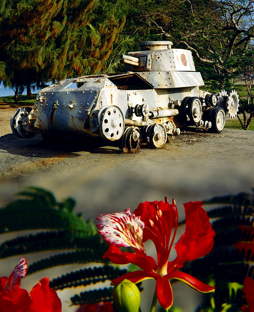 Micronesia, Saipan Beach Road, Japanese WW2 tank monument, flame tree flower