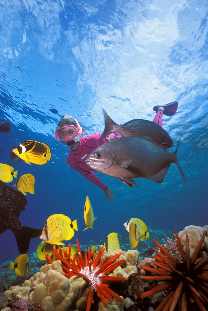 Hawaii, Maui, Molokini, tropical reef scene with woman snorkeling variety of fish