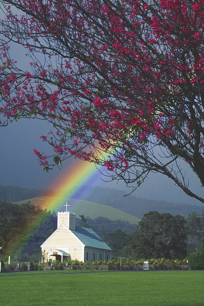 Hawaii, Big Island, Imiola Church, Cherry blossom tree, bright rainbow.
