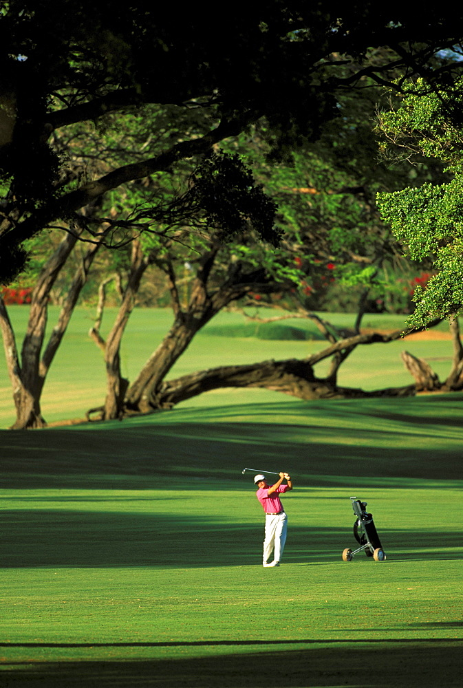 Hawaii, Maui, Spreckelsville Country Club, front view Jim Bendon fairway shot, trees distant background shadows