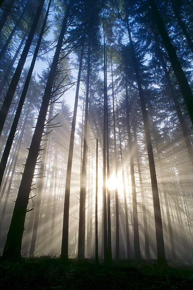 Oregon, Eugene, Spencer Butte Park, fog, sunburst, trees in forest A25H