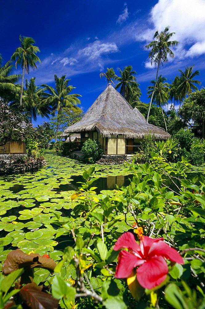 French Polynesia, Tahiti, Bali Hai Hotel, red hibiscus and lily pads fore- ground, thatched huts B1694