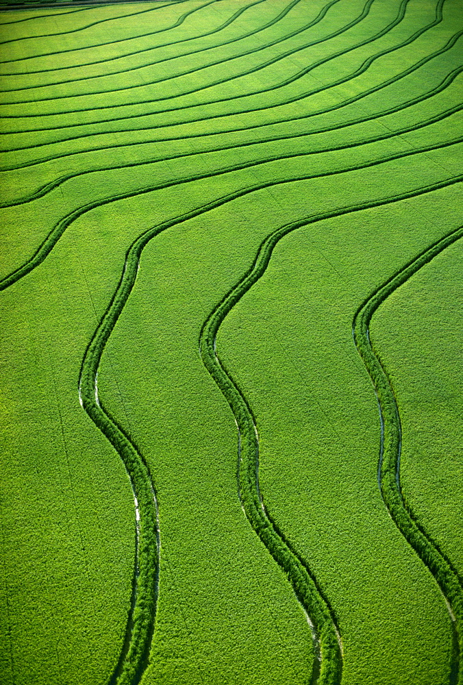 Agriculture - Aerial, Rice fields / Arkansas, USA.
