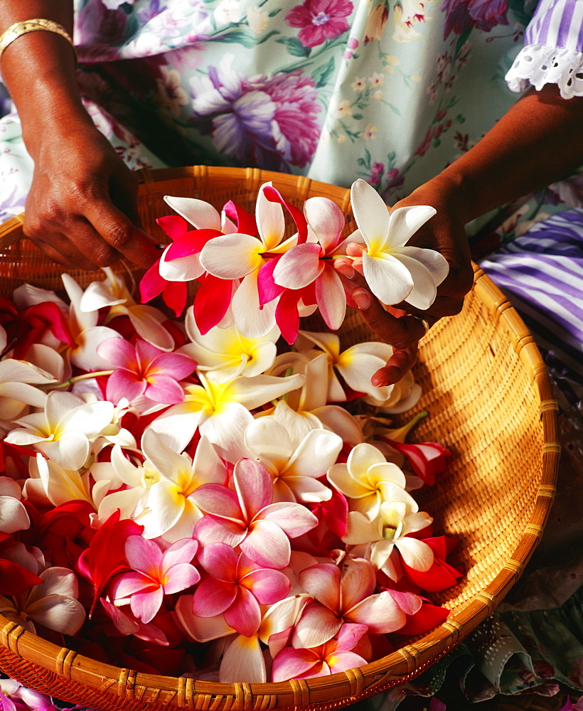 Hawaii, Leimaker, Making Plumeria Leis, Close-Up Of Hands.