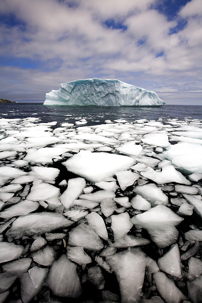 Floating Ice Shattered From Iceberg, Quirpon Island, Newfoundland & Labrador