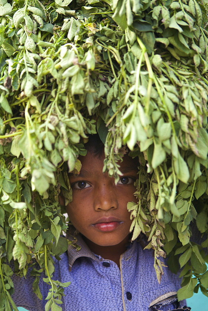 Young boy hiding in the leaves of a tree, Habiganj, Bangladesh