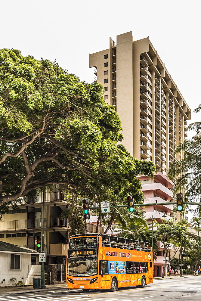 A Waikiki pink line trolley rolls down Kuhio Avenue near the intersection with Launiu Street, Honolulu, Oahu, Hawaii, United States of America