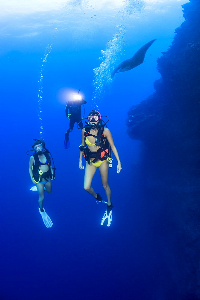 A group of divers and a manta ray (Manta alfredi) on one of the corners of the Backwall at Molokini Marine Preserve, Maui, Hawaii, United States of America