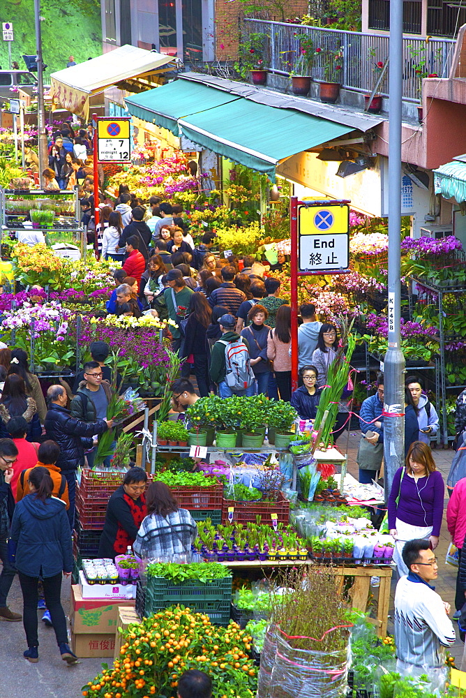 Chinese New Year Flower Market, Hong Kong, China, South East Asia - 1126-1658