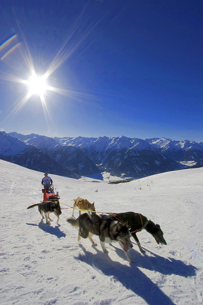 Sledge dog race at Wildkogel, Neukirchen, Pinzgau, Salzburger Land, Austria / Wildkogel Longtrail
