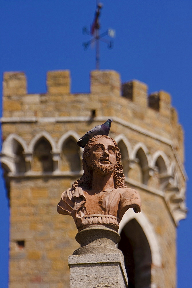 Pigeon on bust, in front of Palazzo del Priori, Volterra, Pisa, Tuscany, Italy
