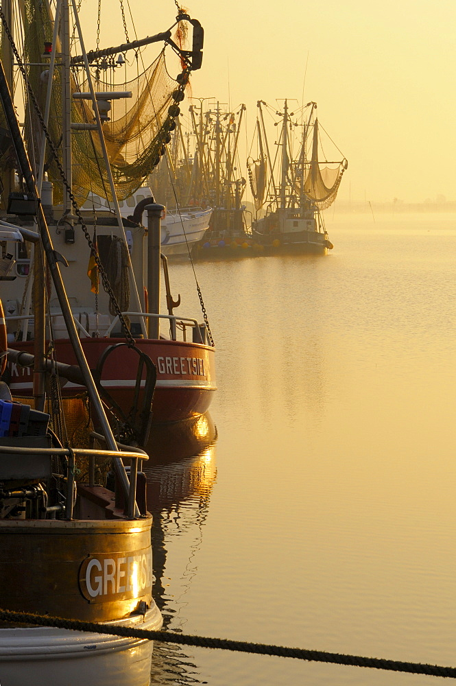 Shrimp boats in harbour, Greetsiel, Lower Saxony, Germany