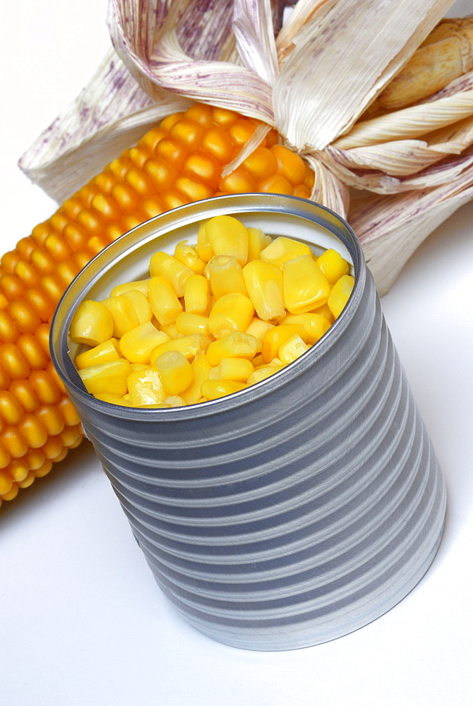 Maize in tin can / (Zea mays)
