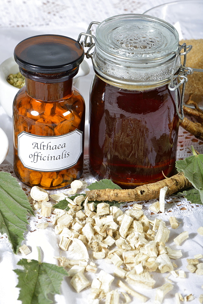 Marsh Mallow, production root syrup / (Althea officinalis)