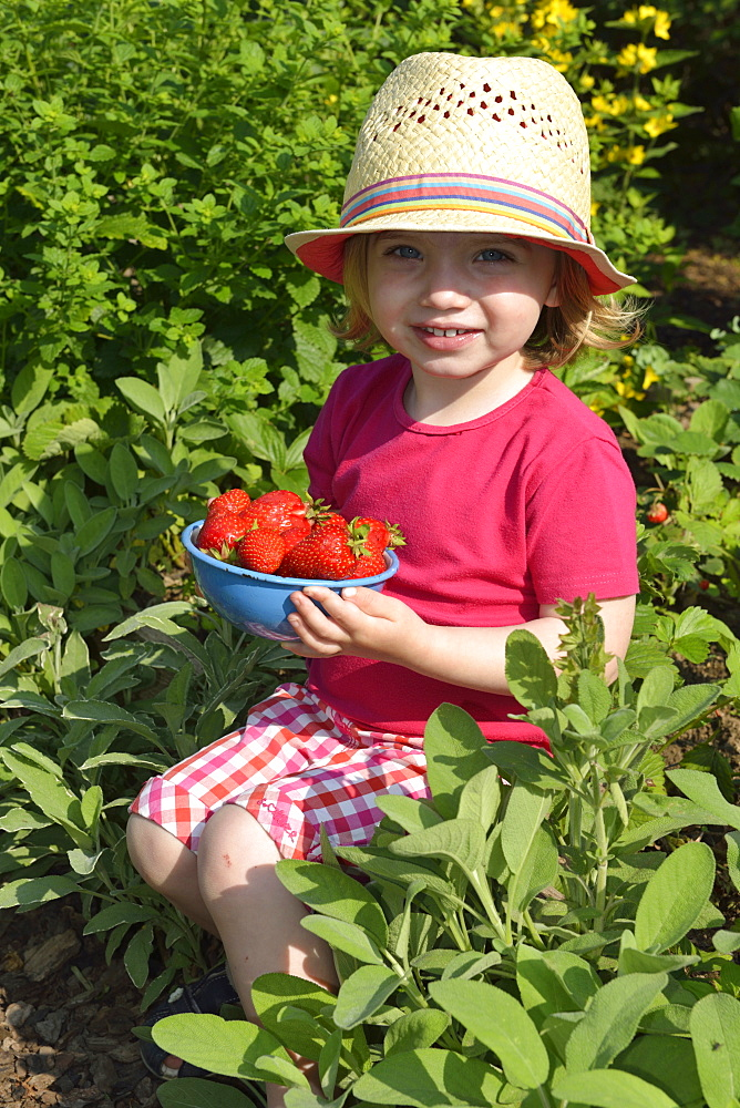 Girl eating strawberries / (Fragaria x ananassa)