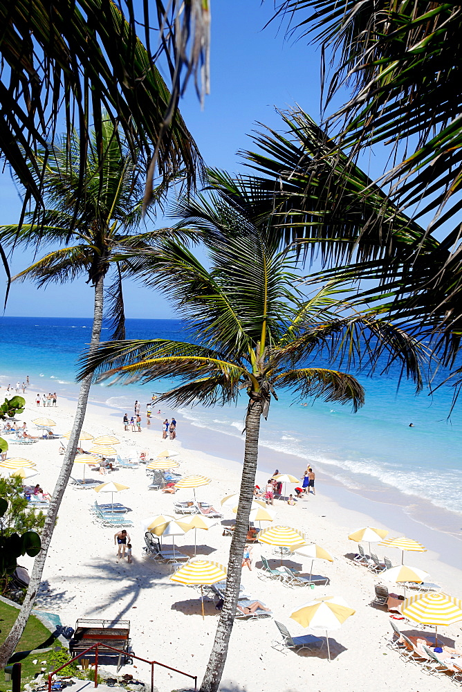 Elbow Beach and palm trees, Bermuda Islands, North Atlantic Ocean, Atlantic
