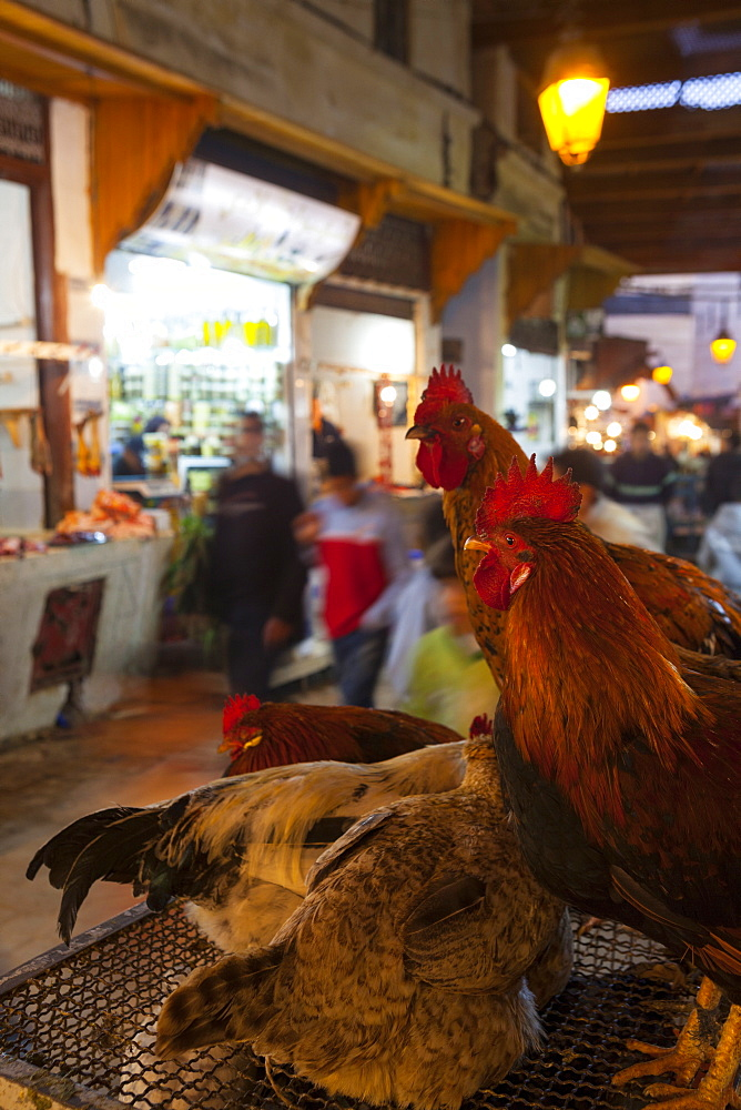 Poultry on sale, Fes el Bali Medina, Fez, Morocco, North Africa, Africa