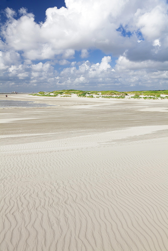 Dunes at a beach, Sankt Peter Ording, Eiderstedt Peninsula, Schleswig Holstein, Germany, Europe