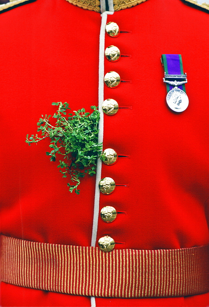 Shamrock worn by a soldier on St. Patrick's Day at Chelsea Barracks, London, United Kingdom.