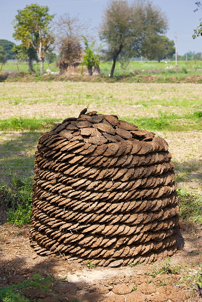 Neatly-stacked dried cow dung, hand-formed into pats to be used for fuel for cooking, at a farm in Agra, Uttar Pradesh, India
