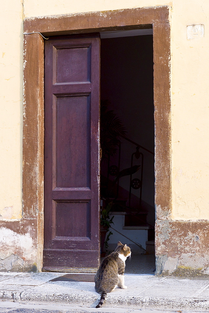 Domestic cat at at Monte Amiata Station in Val D'Orcia,Tuscany, Italy - 1161-5658