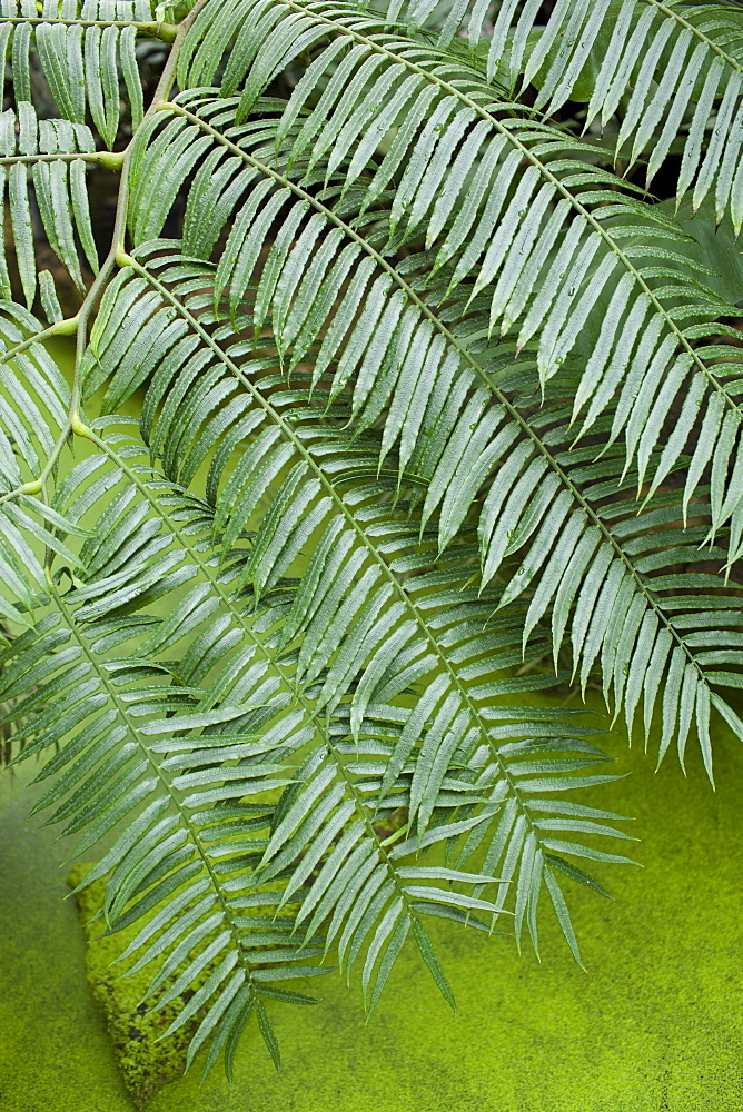 Tropical fern above algae covered pond