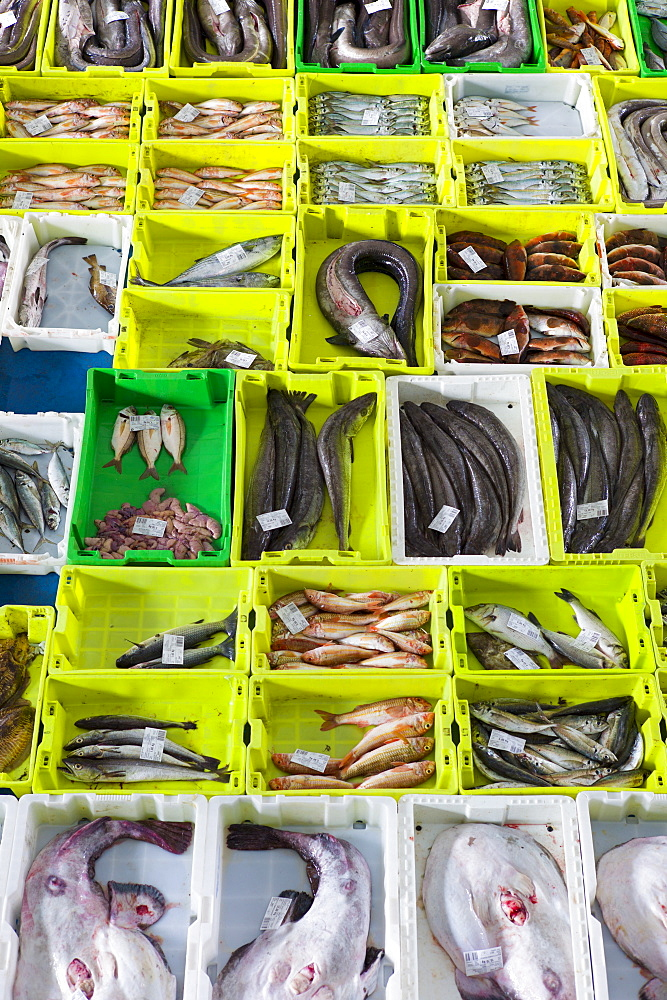 Fresh caught fish at Confradia de Pescadores de Luarca, Confederation of Luarca Fishermen, at Puerto Luarca in Asturias, Spain