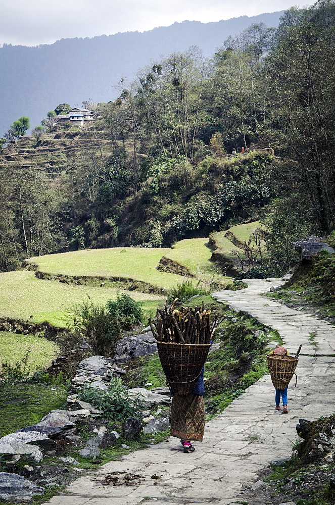 A woman and daughter carry firewood in dolkas back home to Ghandruk, Nepal, Asia  - 1163-66