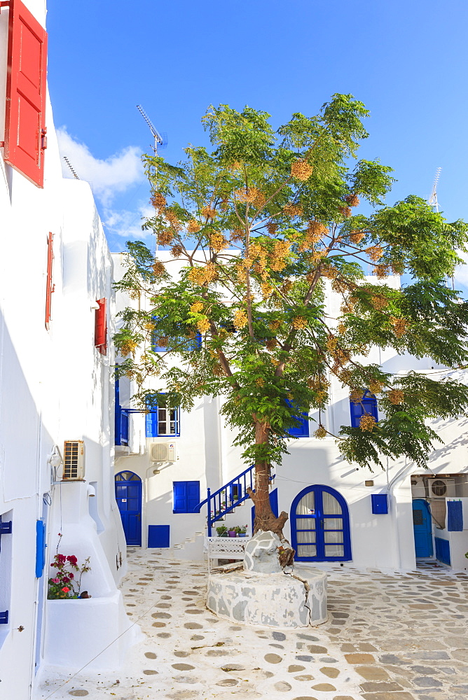 Square with blossoming tree, whitewashed buildings, flowers, blue sky, Mykonos Town, Mykonos, Cyclades, Greek Islands, Greece