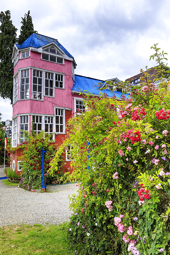 Brightly coloured pink building and pink roses, Chiloe, capital of Castro, Isla Grande de Chiloe, Chile, South America - 1167-1869