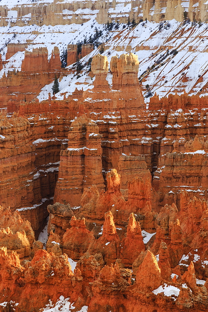 Hoodoos with snow, lit by late afternoon sun, from Rim Trail near Sunset Point, Bryce Canyon National Park, Utah, United States of America, North America