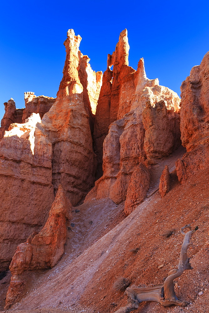 Hoodoos backlit by winter early morning sun, Queen's Garden Trail, Bryce Canyon National Park, Utah, United States of America, North America