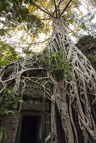 Temple overgrown by strangler fig tree roots over entrance, Ta Prohm Temple, Angkor, UNESCO World Heritage Site, Siem Reap, Cambodia, Indochina, Southeast Asia, Asia - 1170-187
