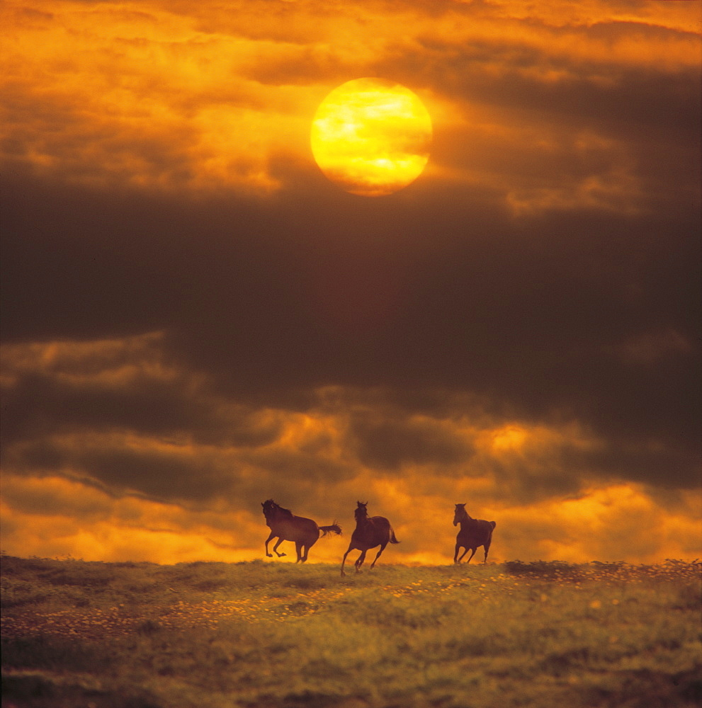 Horses trotting with sun in background