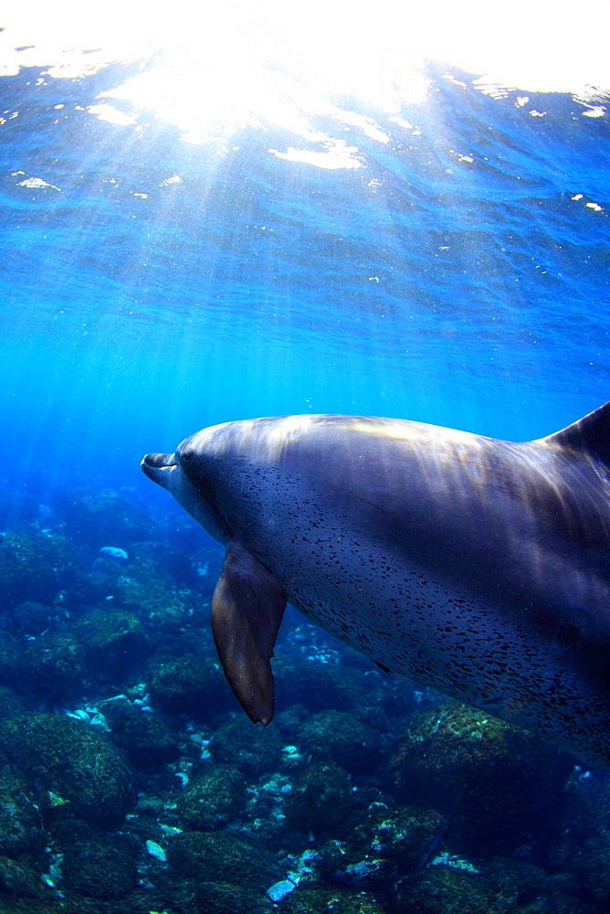 Dolphin swimming underwater
