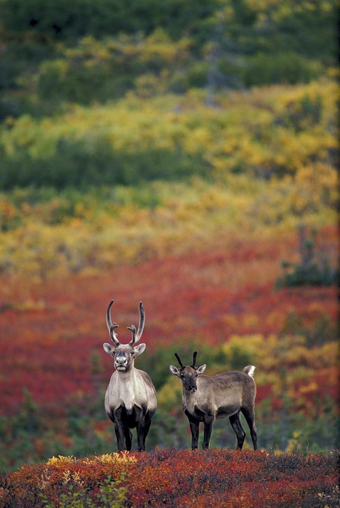 Deer, Japan - 1172-2597