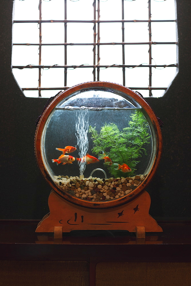 Goldfish in Japanese Interior