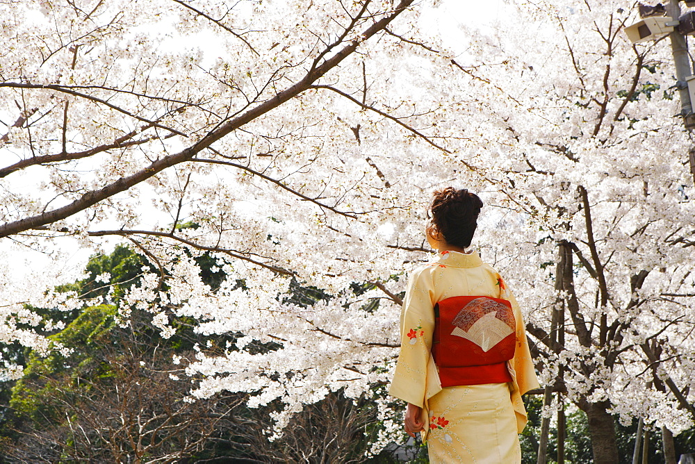 Woman in Kimono Standing Under Cherry Blossom Tree