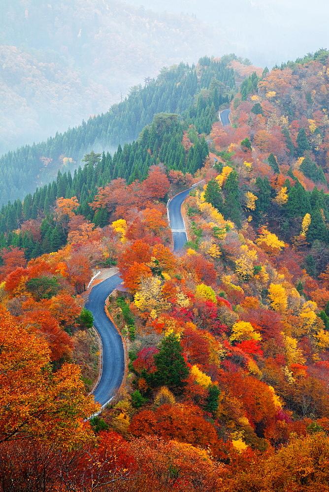 Autumn colors - 1172-3069