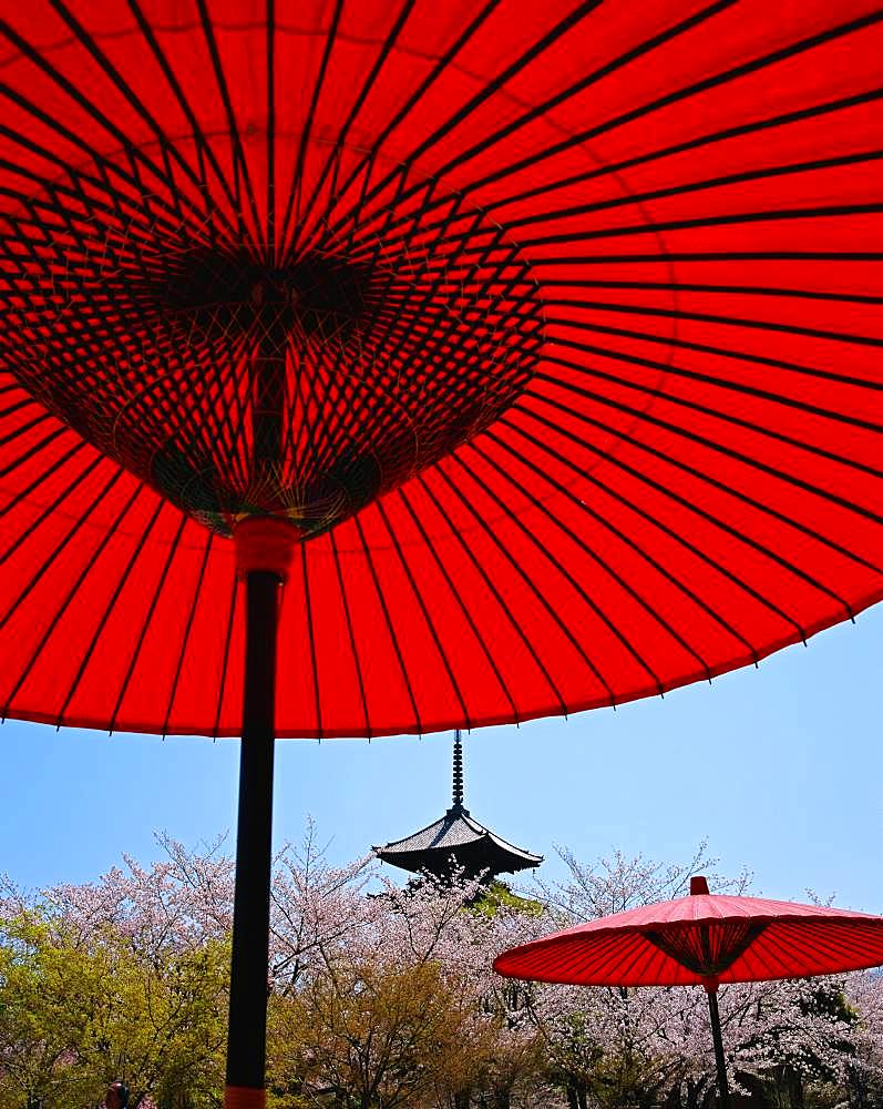 Japanese paper parasols
