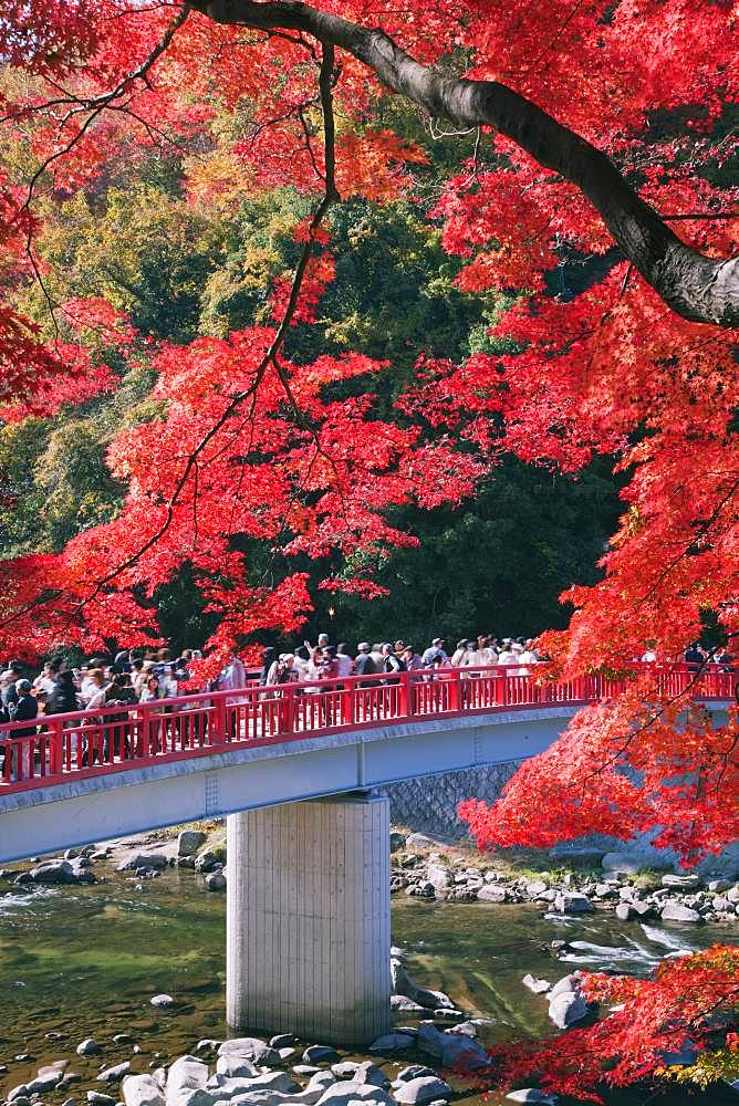Autumn leaves and bridge