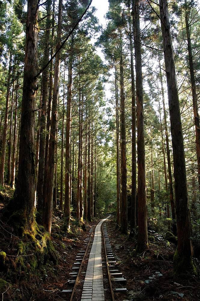 Yakushima, Kagoshima Prefecture
