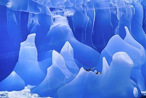 Chinstrap penguins on iceberg, Pygoscelis antarctica, Antarctica